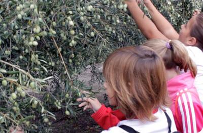 Agroexperiencias : acercando la agricultura a los escolares
