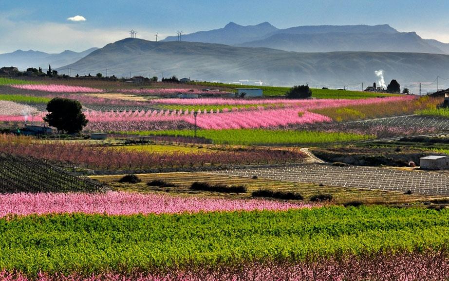 Periodistas y congresistas visitarán la Floración de Cieza y el Valle de Ricote en la segunda jornada del Congreso de Fruta de Hueso de la Región de Murcia