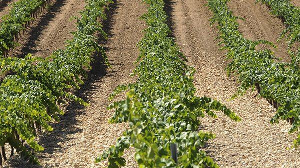 Agromarketing coordina un proyecto de innovación en la producción de vinos